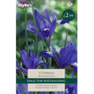 Iris Reticulata Fabiola 12 Bulbs