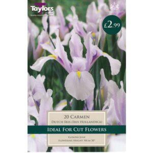 Iris Carmen 20 Bulbs