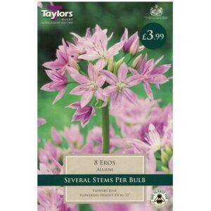 Allium Eros 8 Bulbs