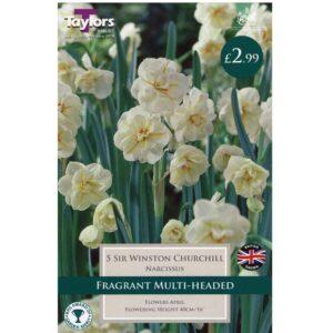 Narcissus Sir Winston Churchill 5 Bulbs