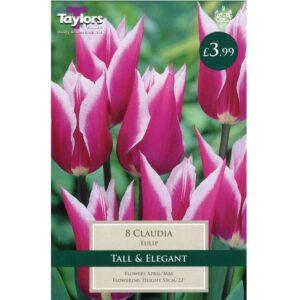 Tulip Claudia 8 Bulbs