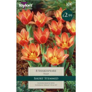 Tulip Shakespeare 8 Bulbs