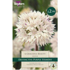 Allium Graceful Beauty 6 Bulbs