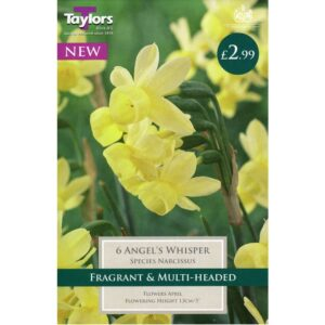 Narcissus Angels Whisper 6 Bulbs