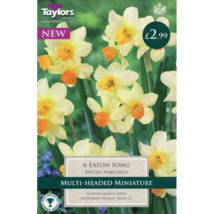 Narcissus Eaton Song 6 Bulbs