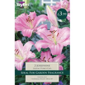Lily Josephine 2 Bulbs