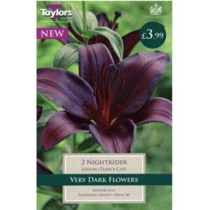 Lily Nightrider 2 Bulbs