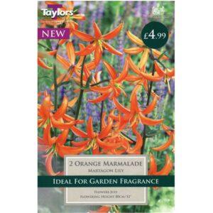 Lily Orange Marmalade 2 Bulbs