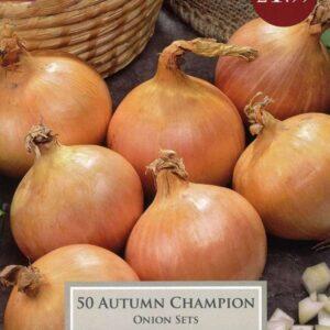 50 Onion Autumn Champion