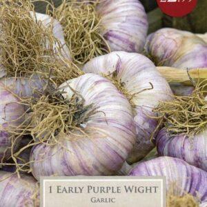 1 Garlic Early Purple Wight